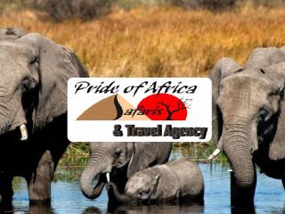 Pride Of Africa - Botswana Maun