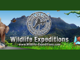 Wildlife Expeditions - Malaysia, Borneo