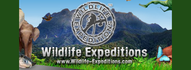 wildlife expeditions